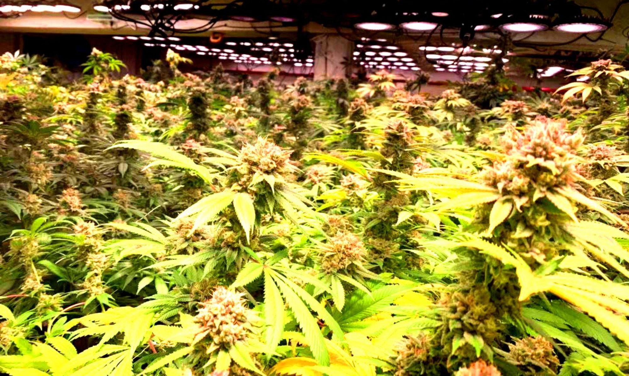 Medical Marijuana Florida Official Website Check Our FB Page & IG